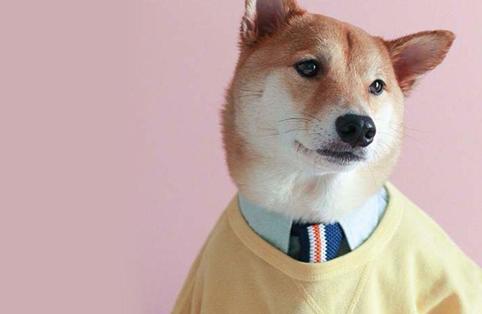 Este alucinante perro gana 15.000 dólares al mes: ¡descubre su historia!