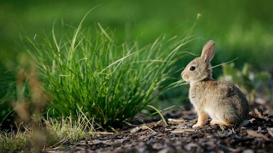 Un animateur radio danois tue un petit lapin en direct et choque le web