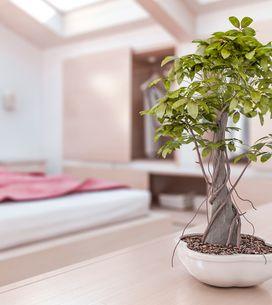Plantas de interior: ¿sabes cómo sacarles el máximo partido?