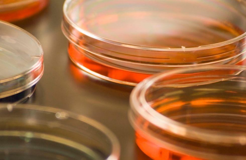 L'immunothérapie, un nouvel espoir dans le traitement du cancer