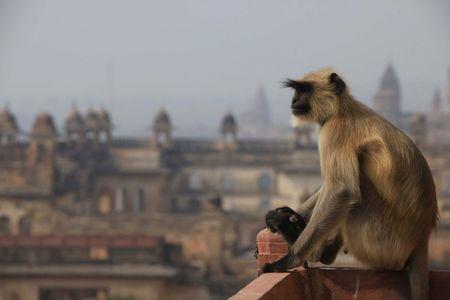 Madhya Pradesh (India)