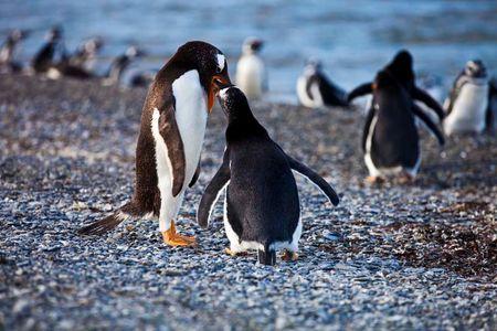 Ushuaia y Antártida (Argentina)