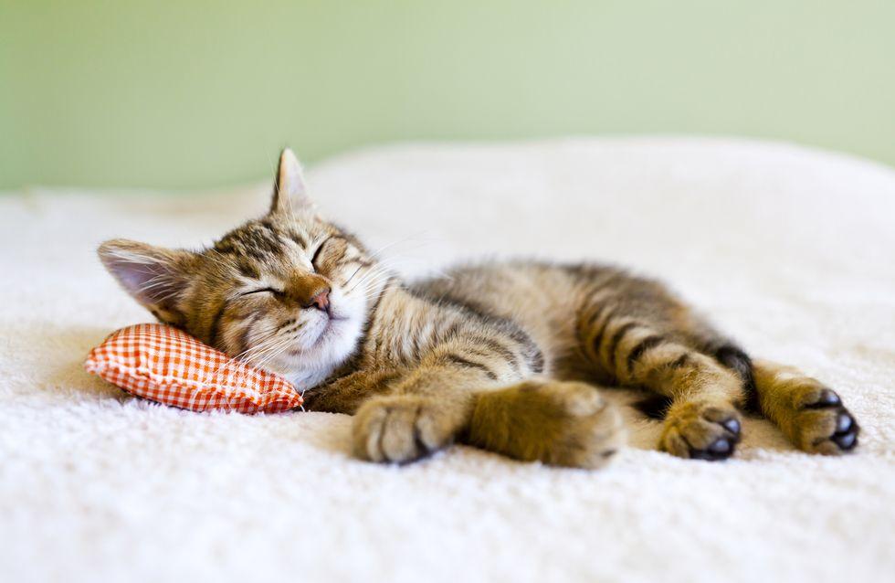 Pourquoi et comment stériliser votre chat ?