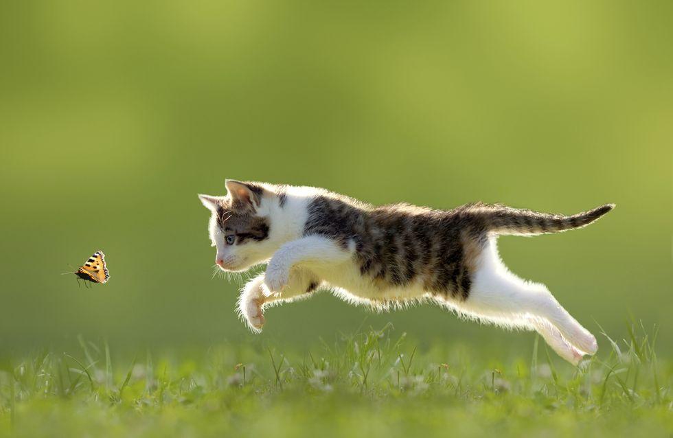 5 idées pour jouer avec son chat