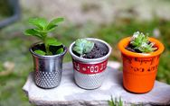 25 ideas mini para decorar tu casa con plantas