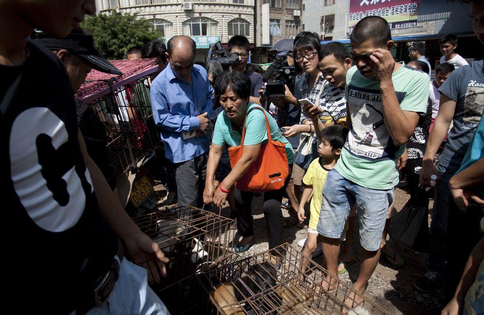 En Chine, une femme sauve 100 chiens de la mort dans le cadre du festival de Yulin