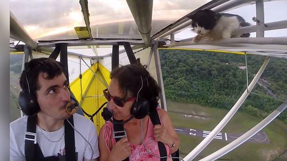 Blinder Passagier: Ihr werdet nicht glauben, was dieser Pilot in seinem Flieger entdeckt