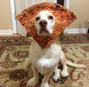 Sid, my regal beagle