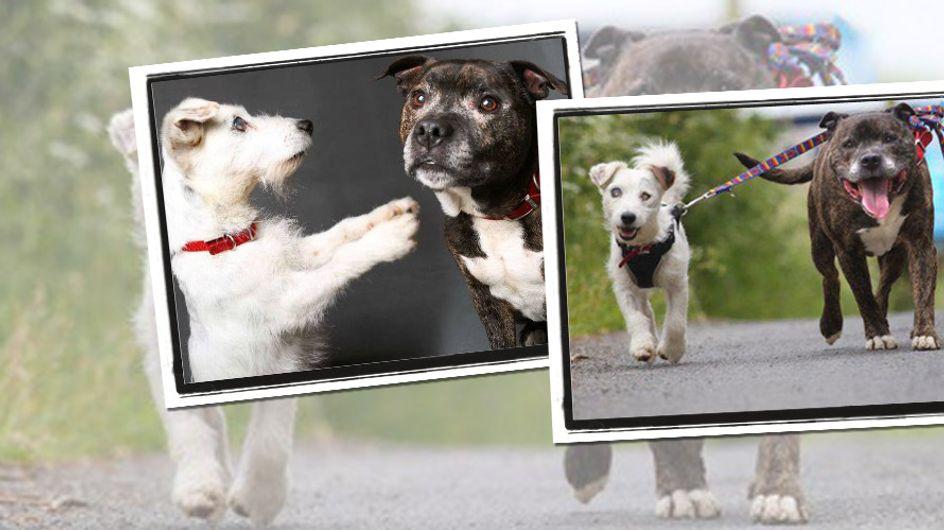 Alt, blind & verstoßen: Diese beiden Hunde meistern ihr Schicksal nur gemeinsam