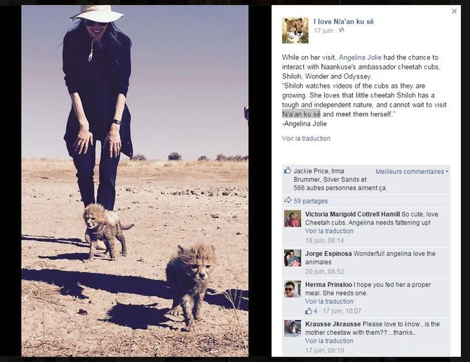 Angelina Jolie et les bébés guépards
