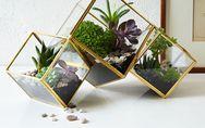Comment faire son propre terrarium ?