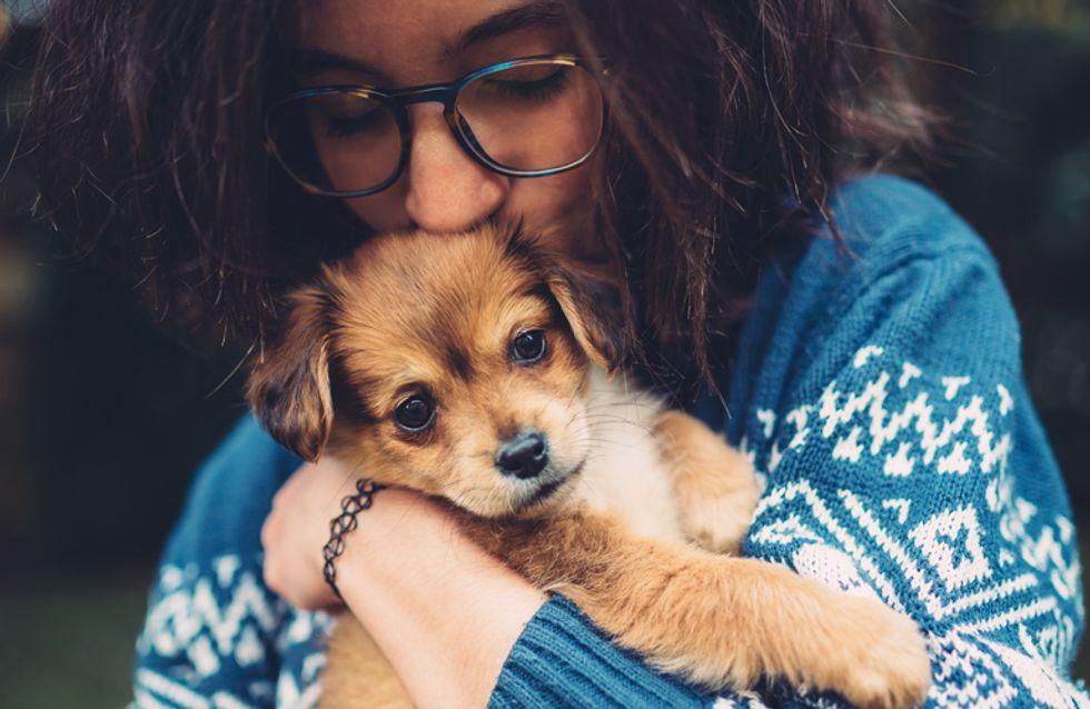 17 coisas que você não pode dizer a uma dog lover