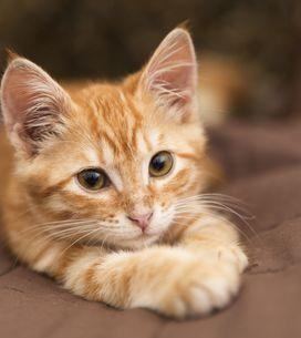 Mon chat a du mal à digérer, quels aliments privilégier ?