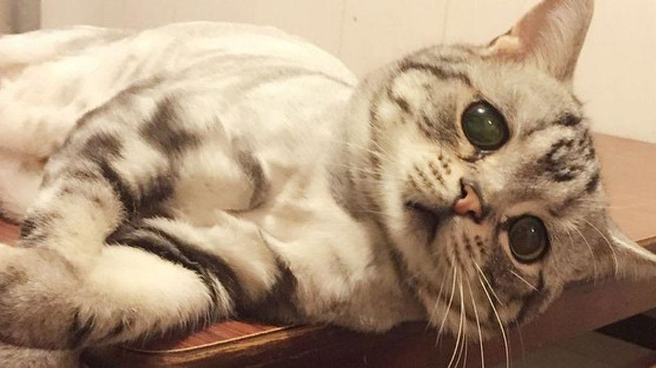 Descubre al adorable Luhu, el gato más triste del mundo
