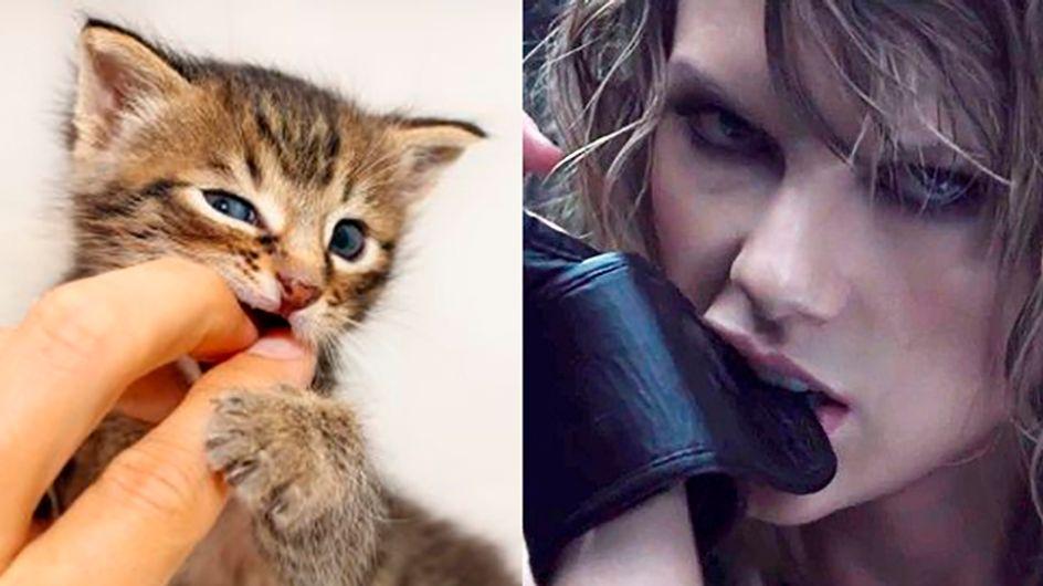 14 gatinhos que parecem ter saído de um clipe da Taylor Swift