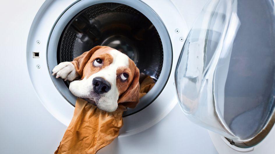 18 Gifs provam que os pets são a melhor ajuda para limpar a casa