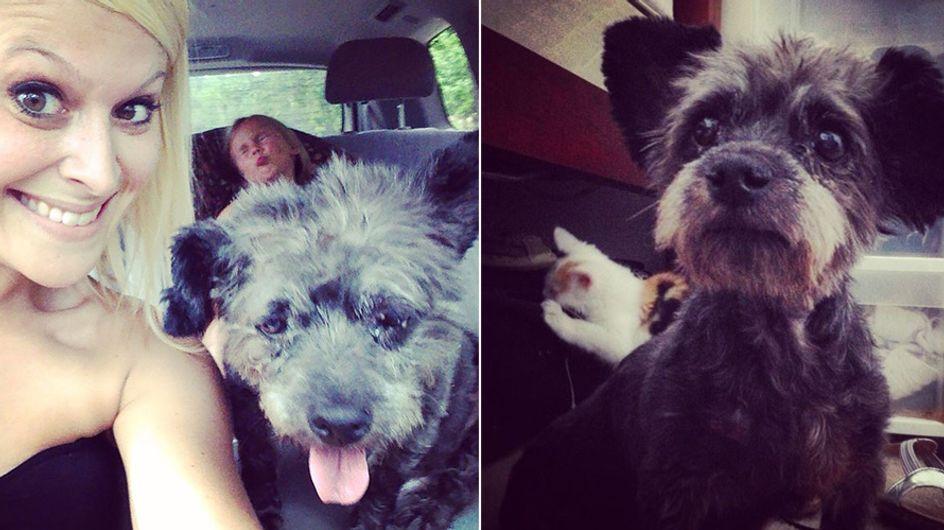 Diese Frau hat einen todkranken Hund adoptiert, um seine letzten Tage unvergesslich zu machen