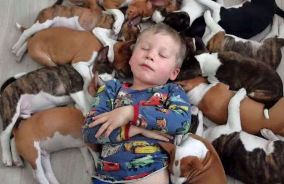 [Vídeo] Así es el divertido día a día de esta familia con dos niños pequeños y 16 cachorritos