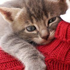 Antes e depois: a emocionante transformação de 45 gatos que sofriam maus tratos