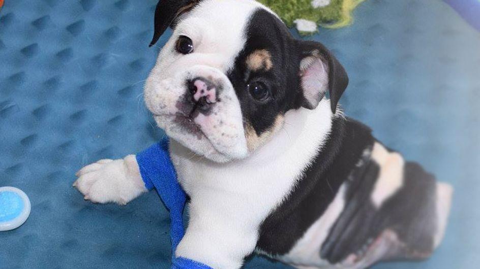 Bonsai ist nur ein halber Hund - aber er hat all unsere Herzen doppelt erobert ♥