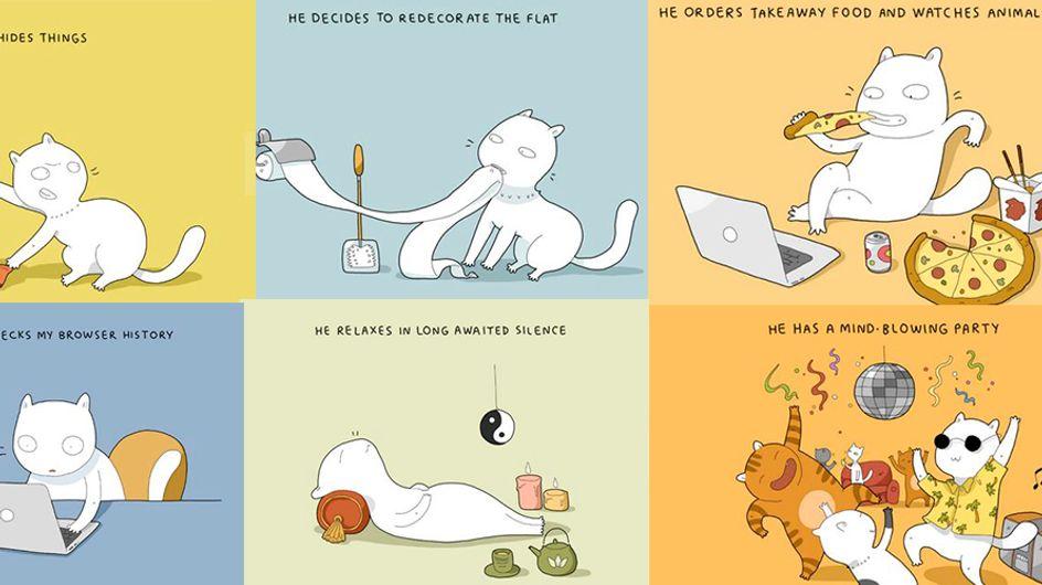 11 coisas que seu gato faz quando você não está em casa