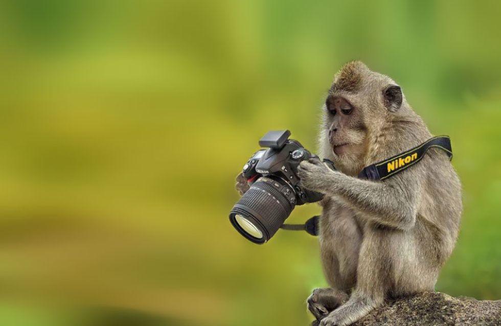 Conheça 40 animais que, se pudessem, seriam fotógrafos