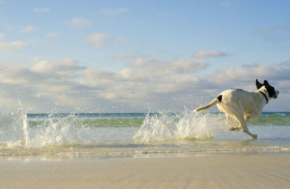 Vacanze con Fido: le migliori spiagge pet friendly d'Italia