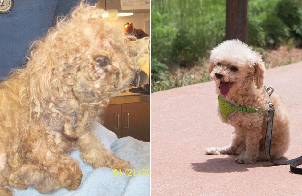 'Bobb' lebte 10 Jahre lang auf der Straße und verlor zwei Beine - trotzdem gab er nie auf