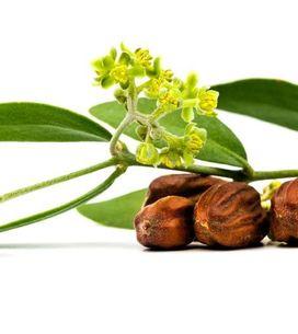 Protettivo, idratante e antiage: scopri le straordinarie proprietà dell'olio di