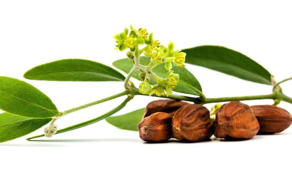 Protettivo, idratante e antiage: scopri le straordinarie proprietà dell'olio di jojoba