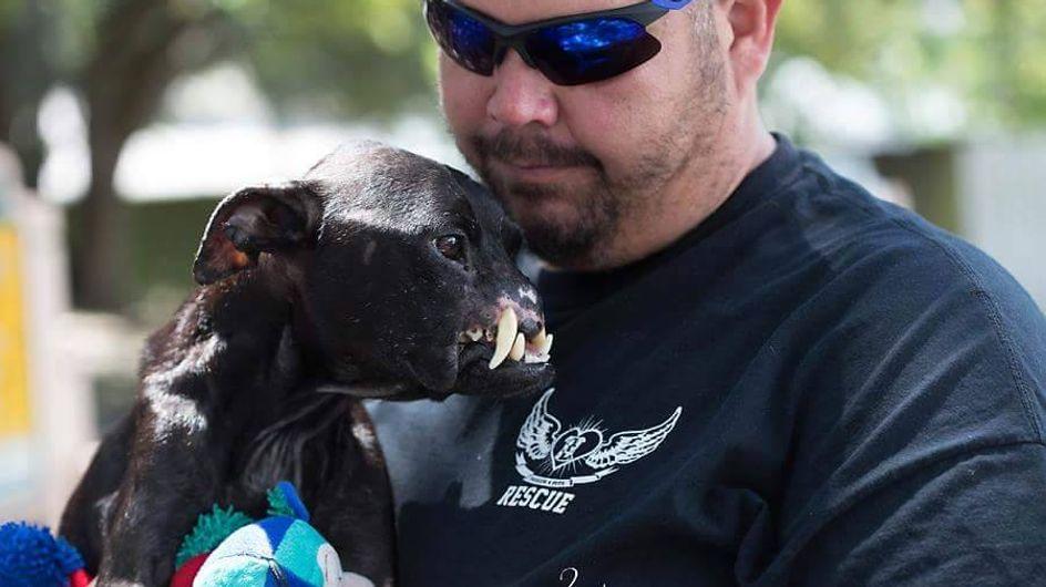 Dieser Hund wurde jahrelang misshandelt - doch sein heutiger Lebensmut rührt uns zu Tränen