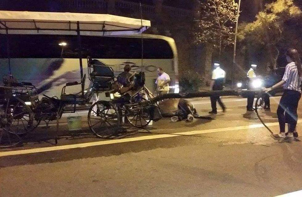 Un cheval tractant des touristes meurt d'épuisement à Barcelone