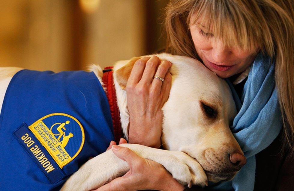 Conheça os courthouse dogs: animais que tranquilizam vítimas em tribunais