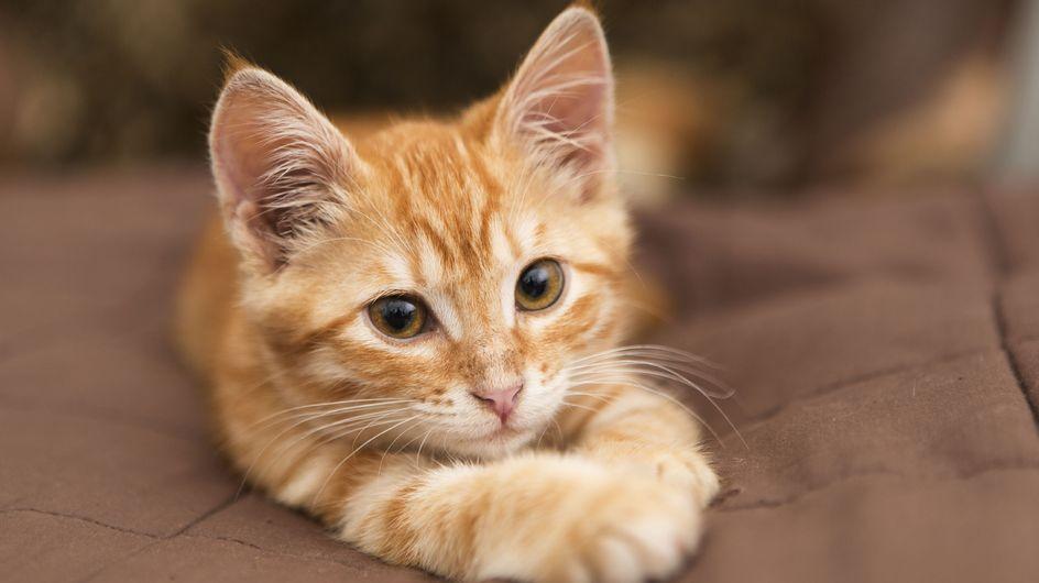 Comment s'occuper de mon chat stérilisé ?