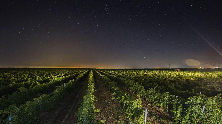 Un paseo nocturno por los viñedos: así se elabora uno de los mejores vinos de Rueda