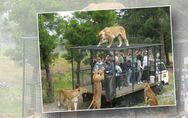 In diesem Tierpark werden Menschen in Käfige gesperrt - und das hat einen guten