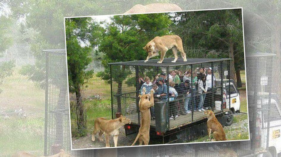 In diesem Tierpark werden Menschen in Käfige gesperrt - und das hat einen guten Grund!