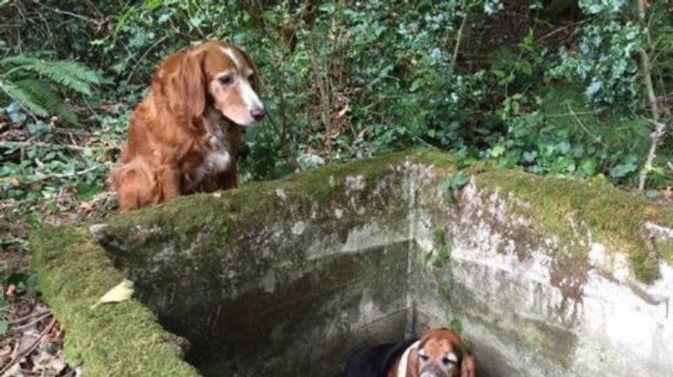 Ce chien a veillé un compagnon coincé dans une citerne pendant une semaine