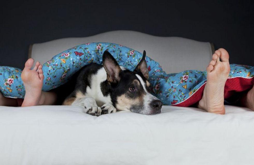 8 tipiche reazioni del tuo cane o gatto se ti scopre mentre fai sesso