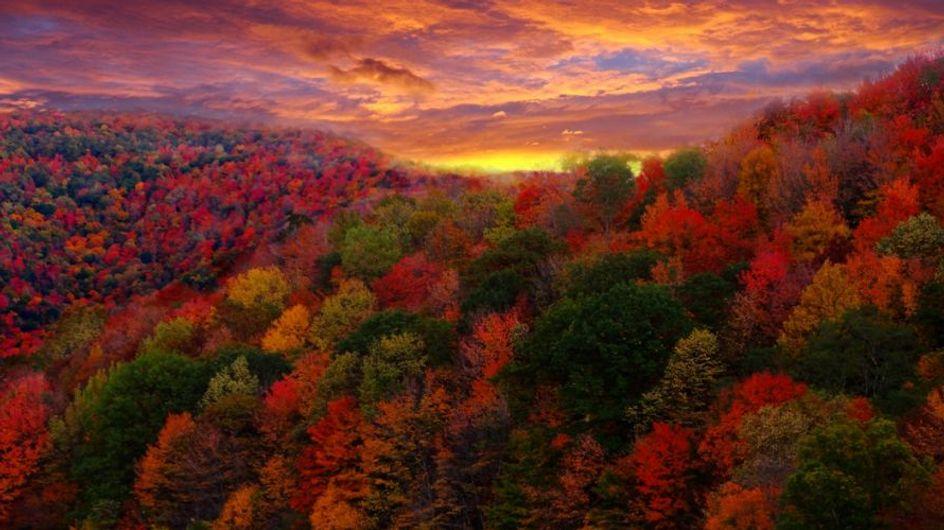 Vendemmia, foliage e specialità gastronomiche: 12 weekend per godersi tutto il bello dell'autunno