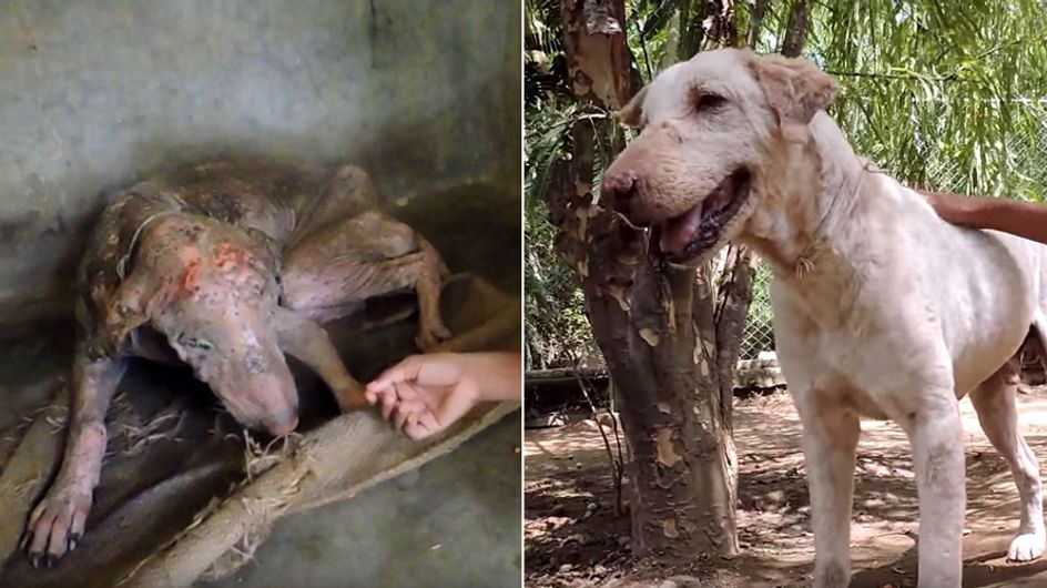 Dieser Hund lag im Sterben - doch SO sieht er heute Gott sei Dank nicht mehr aus