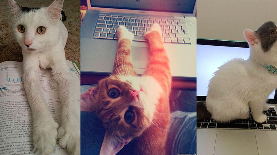 65 gatos que não respeitam o espaço alheio e protagonizam cliques engraçadíssimos