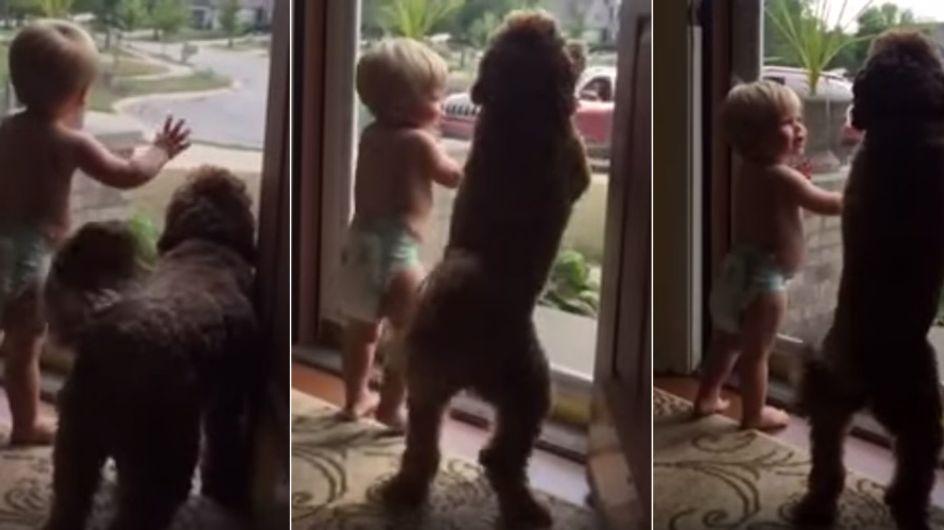 """""""Papa ist zu Hause!"""" So süß empfangen Baby und Hund den Herren des Hauses"""