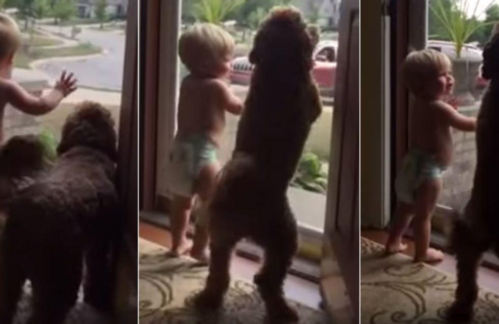 Papa ist zu Hause! So süß empfangen Baby und Hund den Herren des Hauses