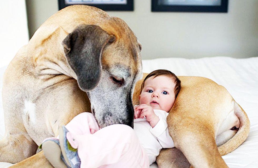 22 grandes mascotas cuidan de los más pequeños de la casa