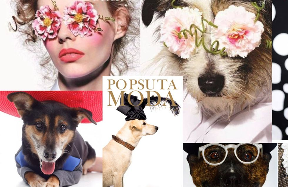 ¿Y si un perro abandonado fuera portada de una revista de moda?