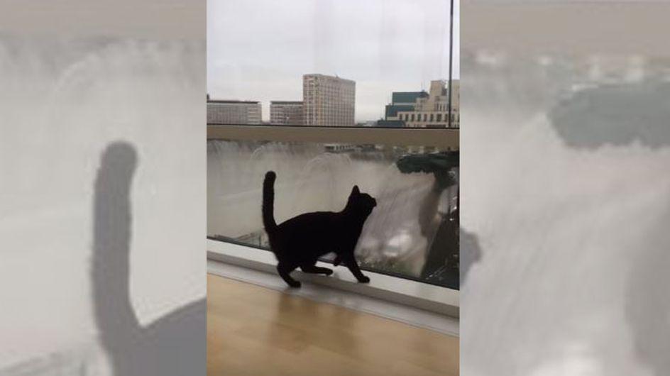 Unglaublich, wie sich eine Katze über den Fensterputzer freuen kann!