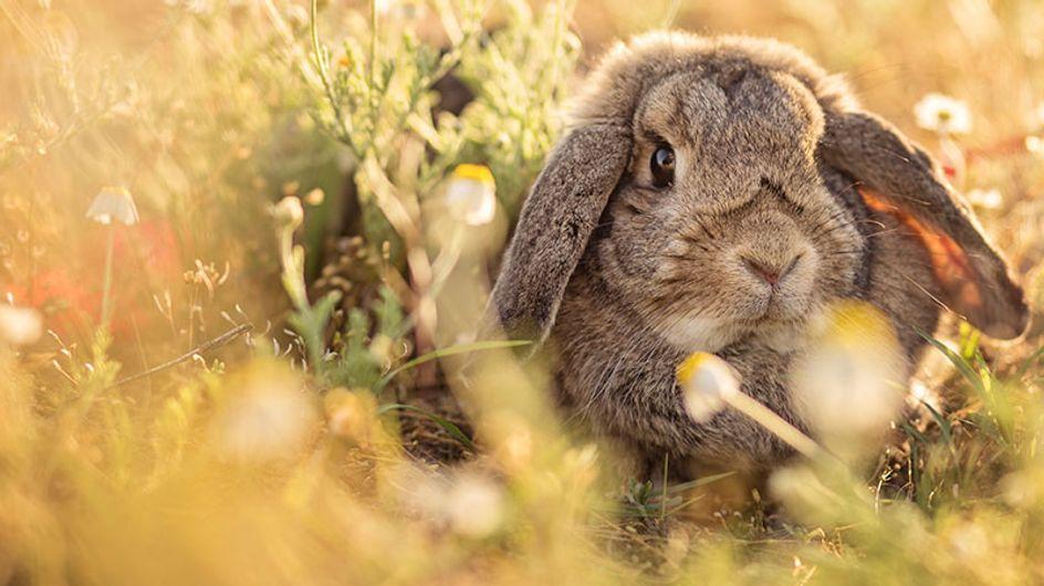 #crueltyfree: veja 42 marcas brasileiras de cosméticos que não testam em animais