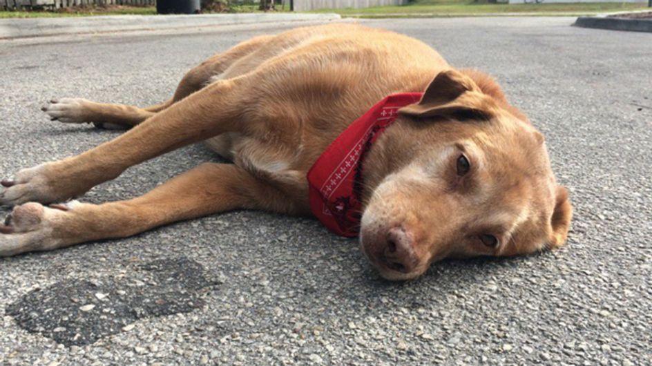 Die Treue dieses Hundes für sein Frauchen bricht uns das Herz