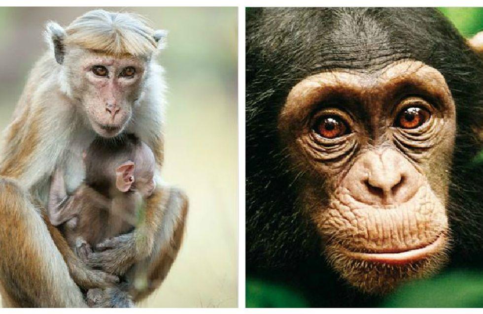 Les singes superstars au cinéma
